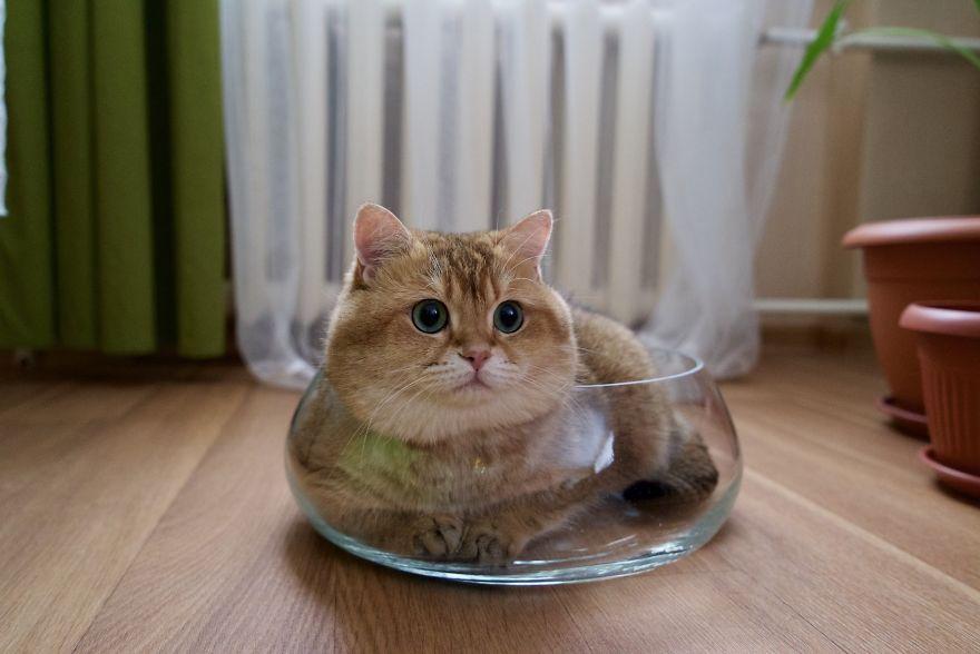 «Мимимишный» кот Hosico