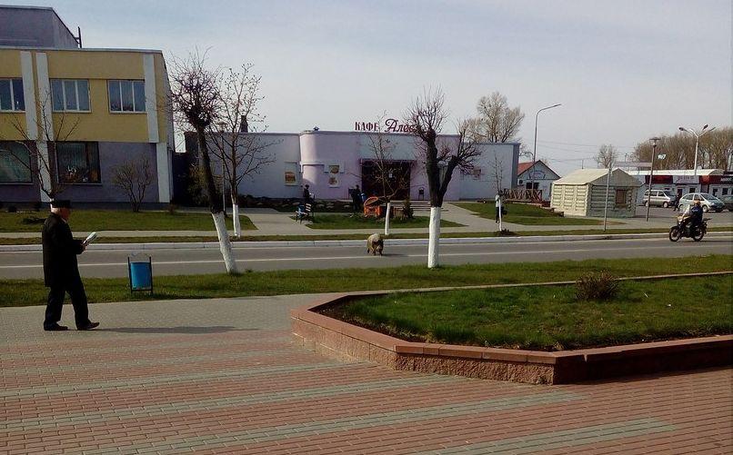Фотофакт. «Дикий кабан» в центре Ляховичей напугал местных жителей