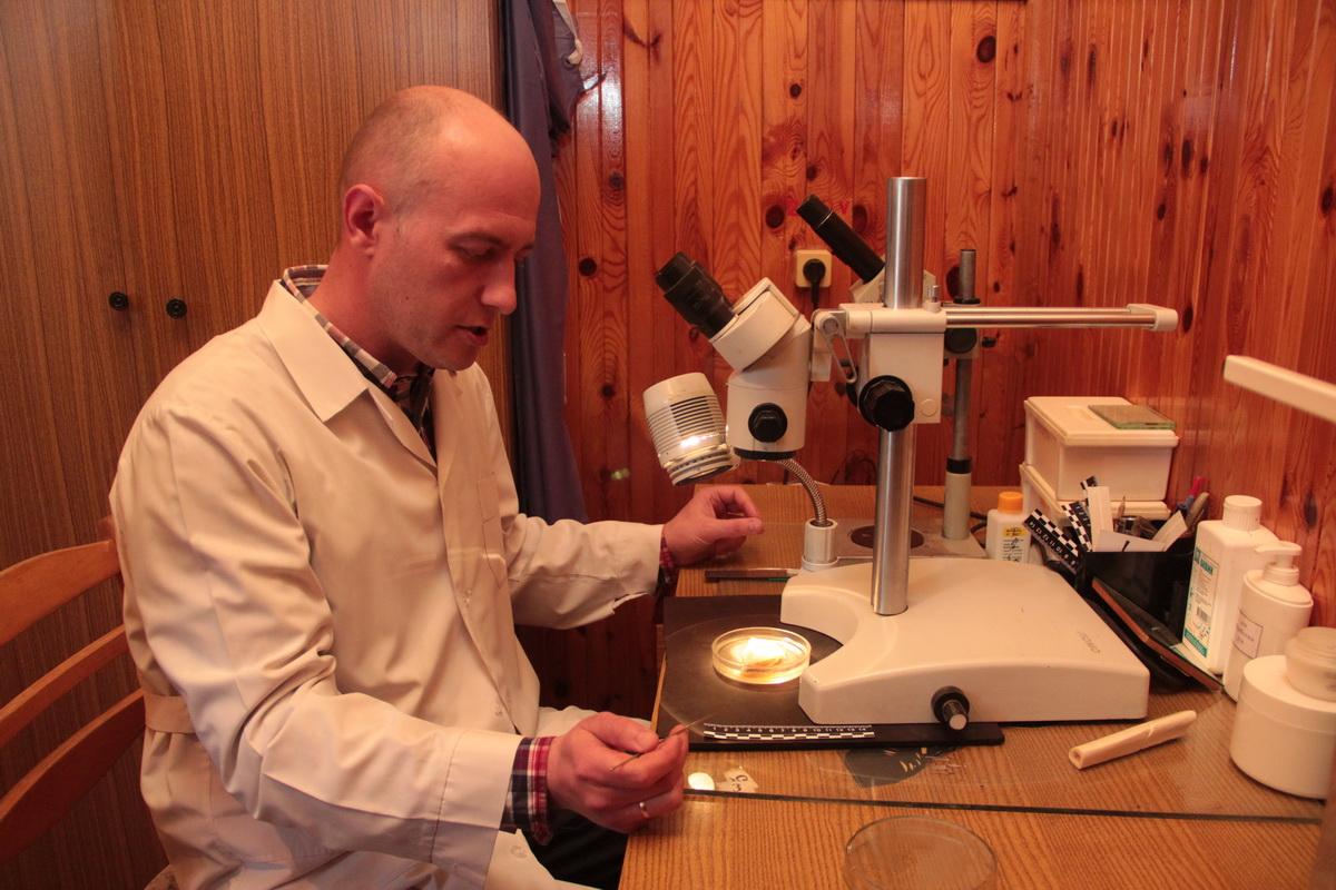 Юрий изучает лоскут кожи с ножевым ранением. Фото: Юрий ПИВОВАРЧИК