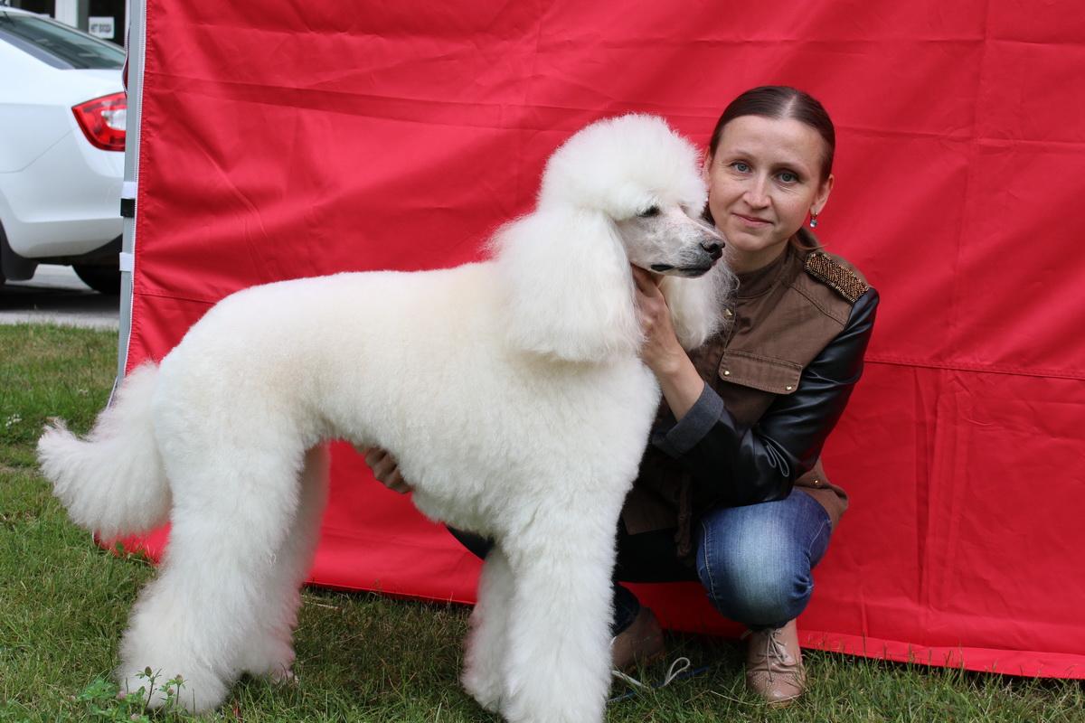 Наталья Завадская со своей любимицей королевским пуделем Бонитой, которая стала главным украшением выставки – чемпион РБ и гранд-чемпион РБ.