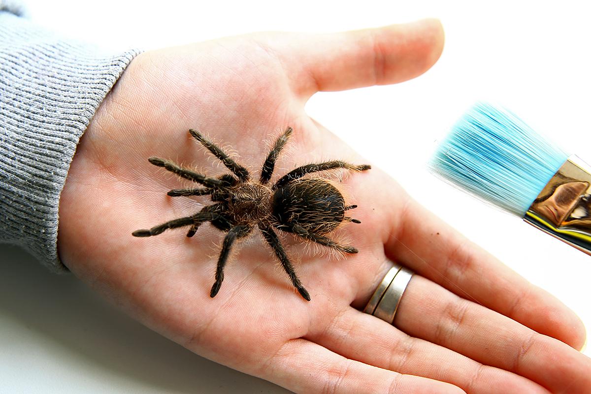 Анастасия назвала своего паука Аленка.