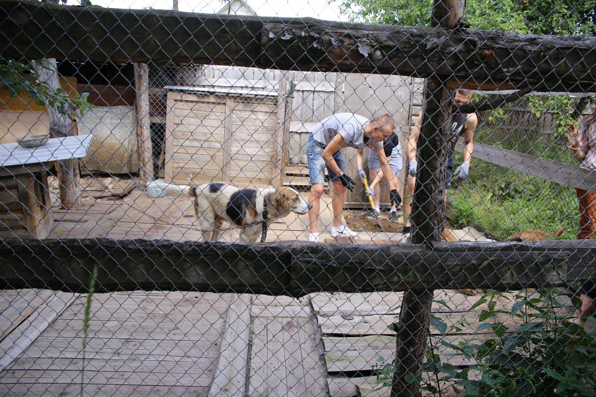 Футболисты барановичской любительской команды ФК «Восход» ремонтируют пол в вольере.