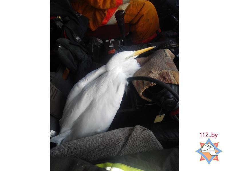 Спасенная птица. Фото: http://mchs.gov.by