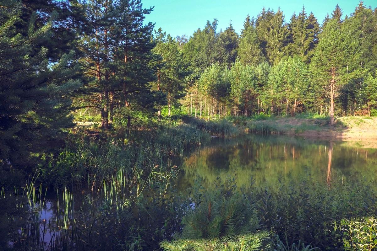 Белорусская природа очаровала семью московского генетика Юрия Шарца.