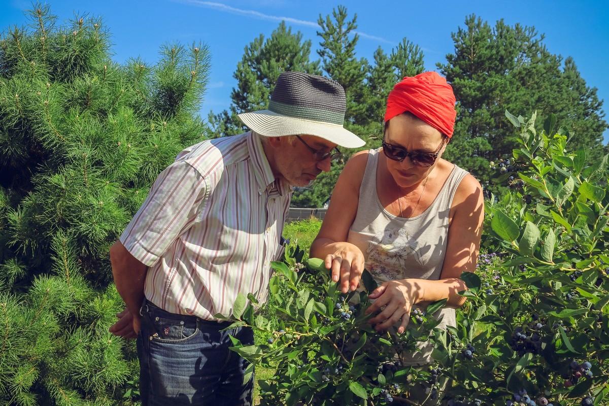Юрий и Нина отличают ягоды по вкусу, внешнему виду и даже аромату.