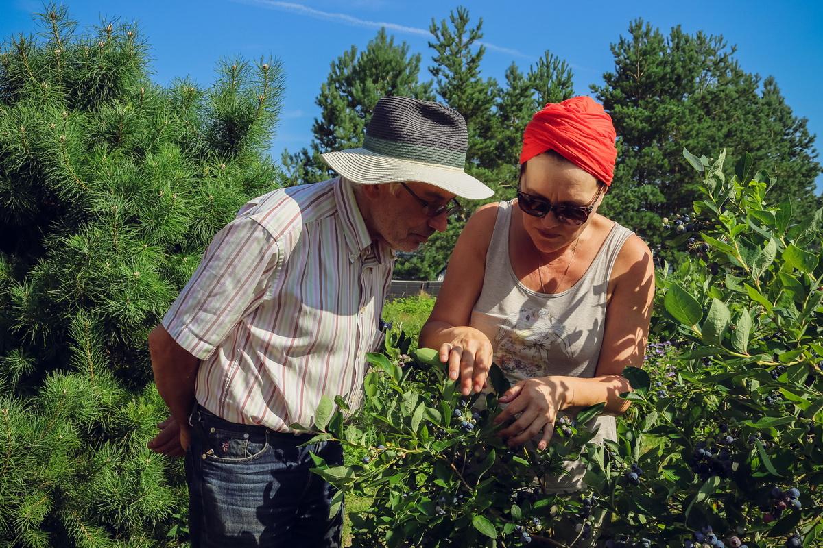 Юрий и Нина Шарец говорят, что существует множество сортов голубики. Каждый сорт ягод отличается не только внешне, но и по вкусу. Фото: Александр ЧЕРНЫЙ