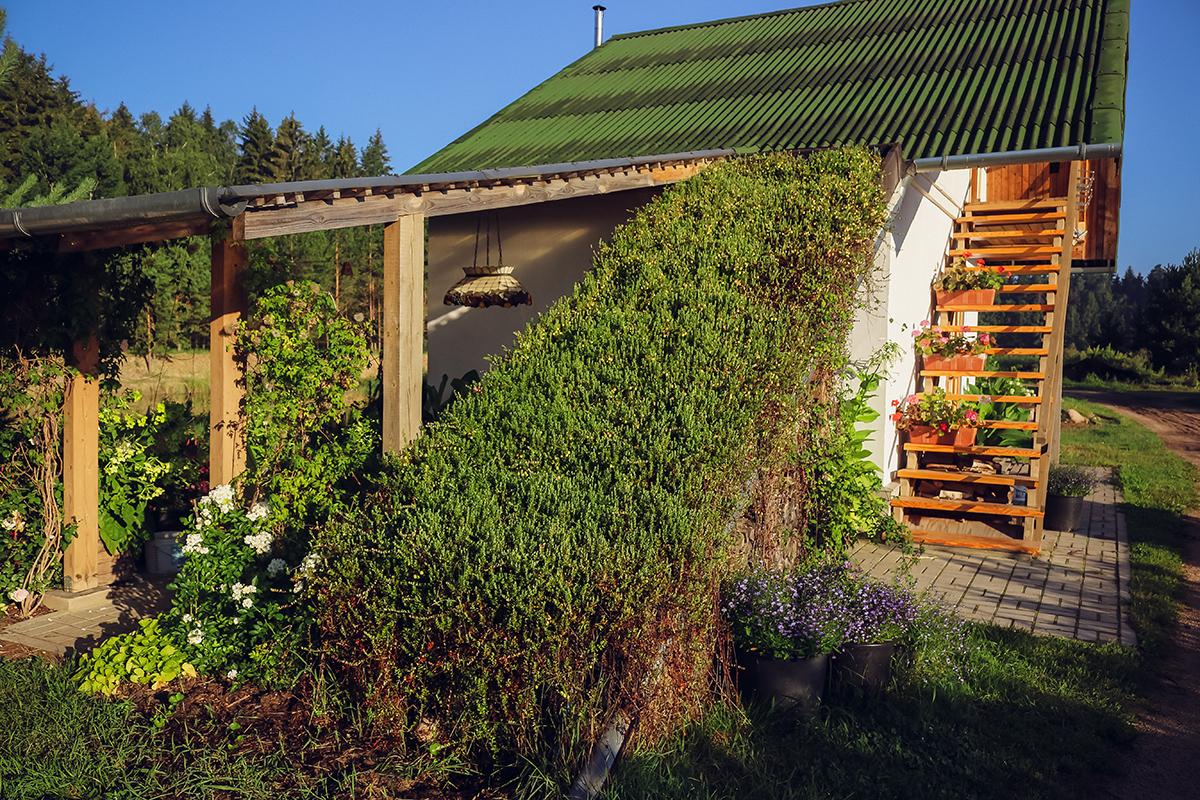 На крыше дома из соломы растет клюква.