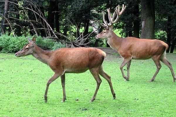 Фото: http://gosinspekciya.gov.by