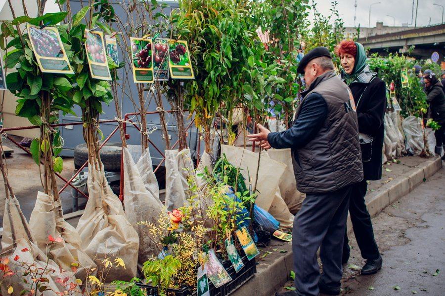 На сельскохозяйственной ярмарке в Барановичах представлено несколько десятков сортов саженцев плодовых деревьев и кустарников. Фото: Александр ЧЕРНЫЙ