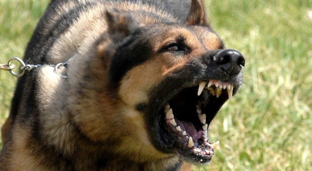 Полиция отыскала владелицу покусавшей ребенка вБресте собаки