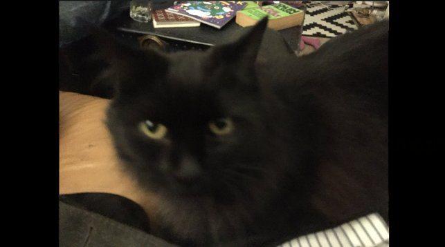 Кошка Коко