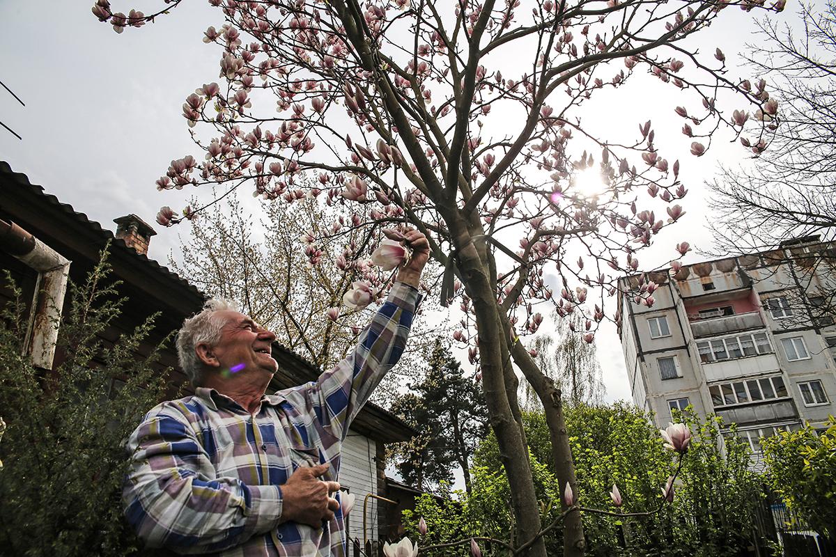 Весна 2018 года. Магнолия цветет у Дребезовых. Фото: Евгений ТИХАНОВИЧ