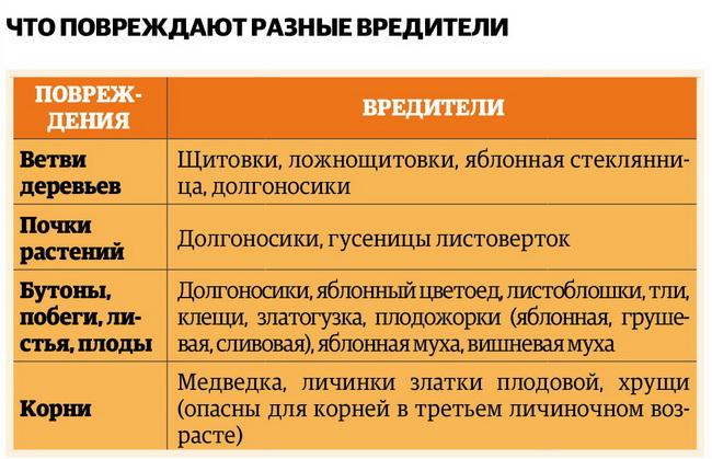 Как спасти урожай в саду от вредителей — Intex-press. Последние новости города Барановичи, Беларуси и Мира