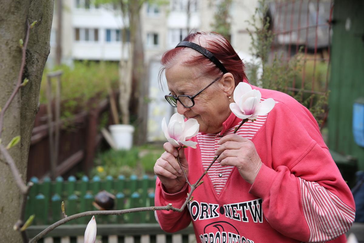 Для Леониды Дребезовой магнолия – как любимый ребенок. Женщина  переживает, что цветение дерева в этом году может оказаться последним. Фото: Евгений ТИХАНОВИЧ