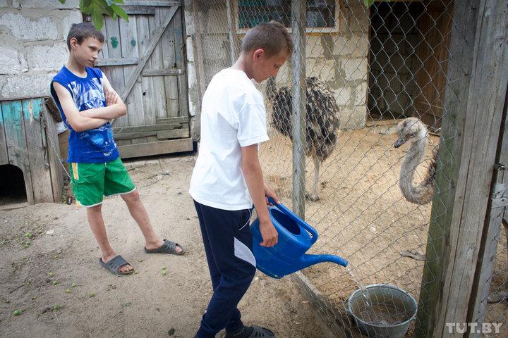 «Главный страусовод» в семье Кундиковых Саша наливает воду страусам, которых сам попросил в подарок у Виктора Лукашенко. Парню очень нравится ухаживать за животными. Фото: TUT.by.