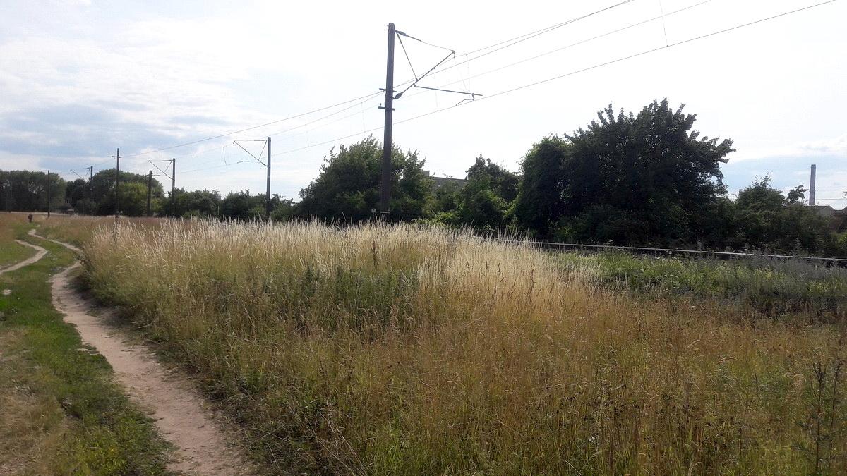 Поле, где была найдена убитая. Фото: Алена СЕРИКОВА