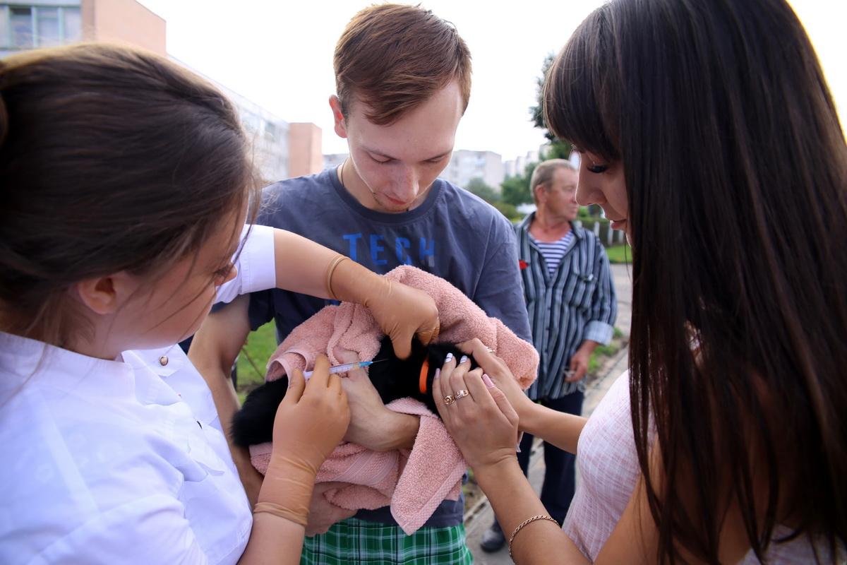 Юлия и Дмитрий принесли на вакцинацию кошку Софу