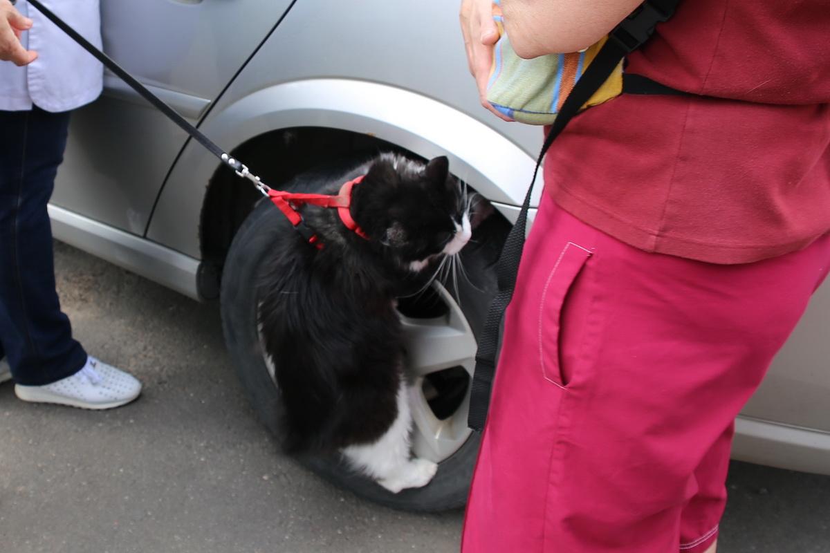 Не все пациенты в восторге от предстоящей прививки: кот Том решил сбежать прямо на машине ветпомощи