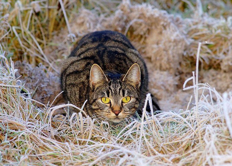 В Барановичах бешеные кошки покусали четырех человек. Планируют ввести карантин